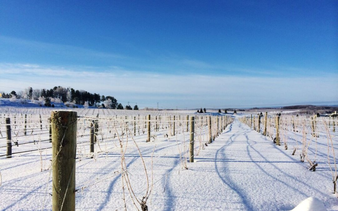 Wine Enthusiast: Behind America's Unexpected Cool-Climate Wine Region, Michigan